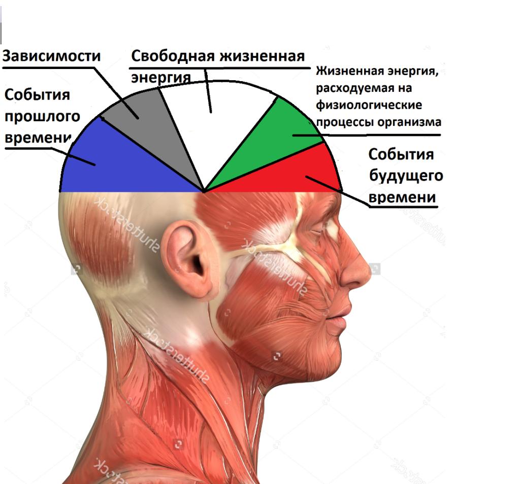 человеческий мозг фото