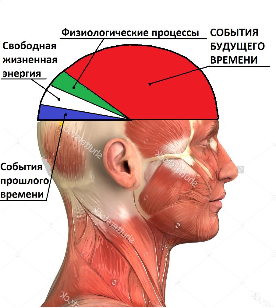 человеческий мозг картинки