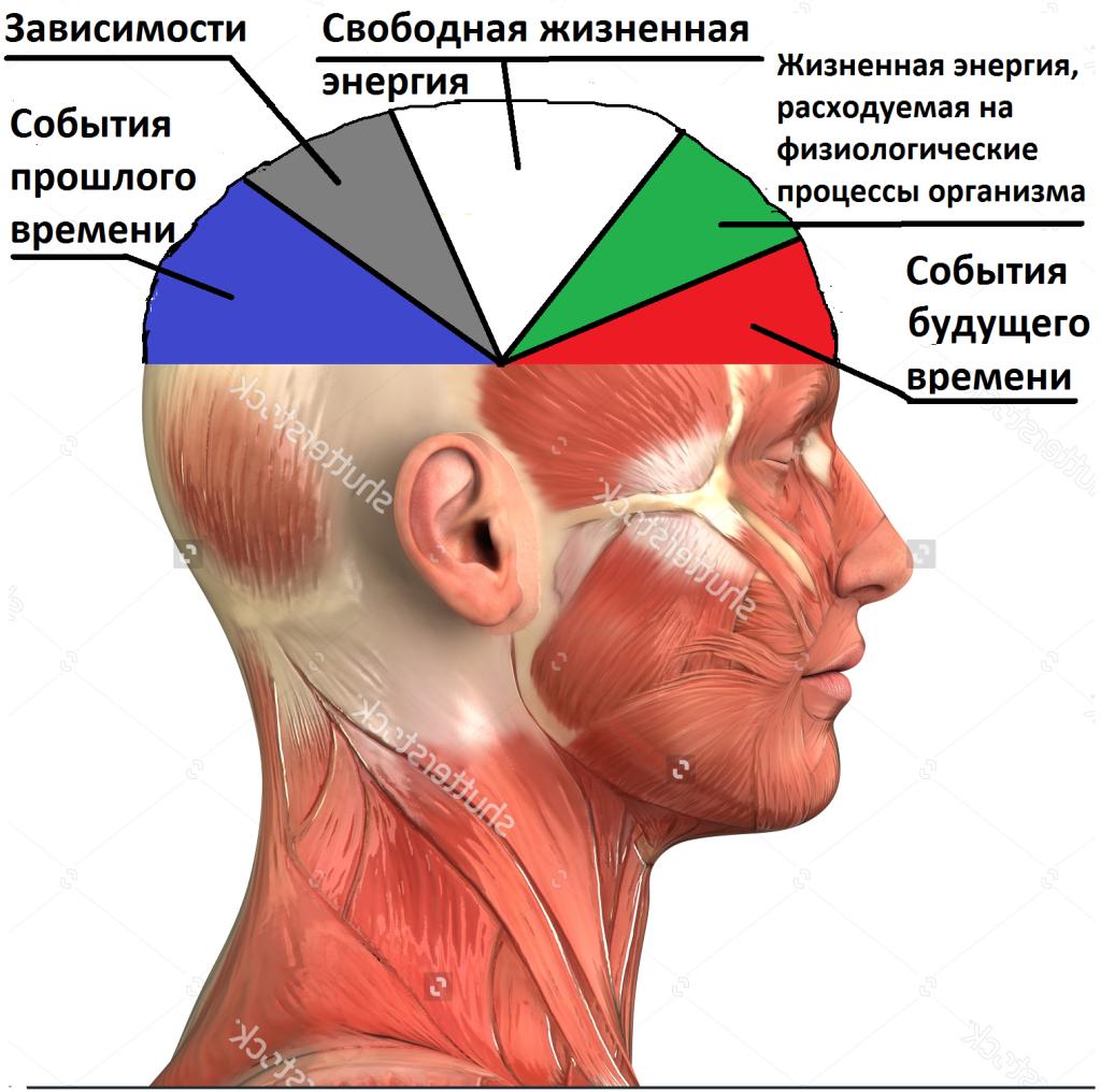 мозг фото