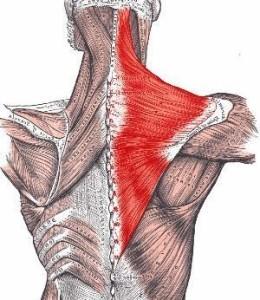 Упражнения для выпрямления спины в домашних условиях