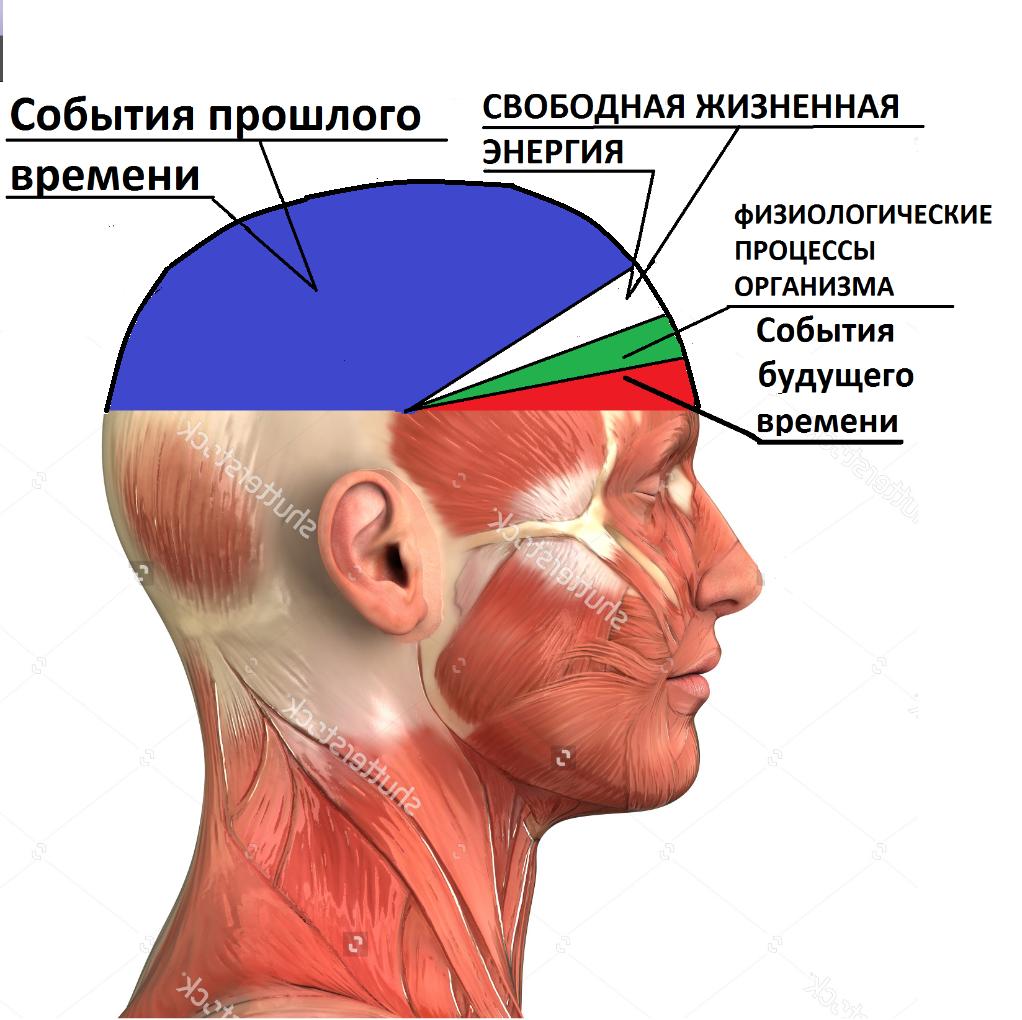 мозг человека картинки