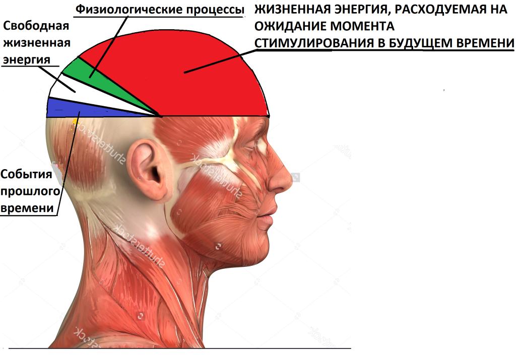 человек мозг картинки